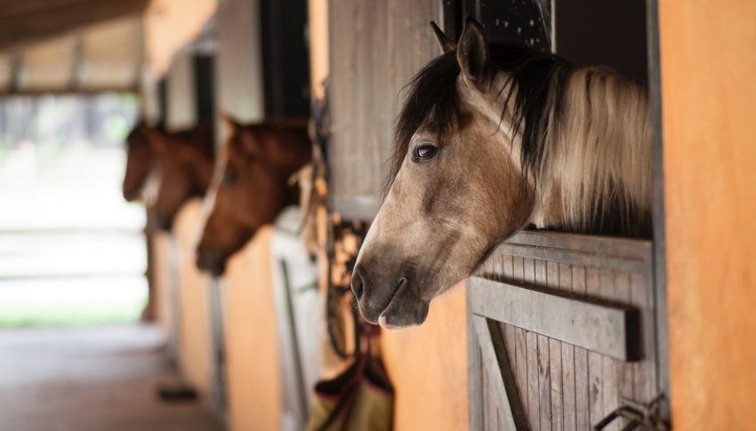 Ritten te paard terug toegelaten
